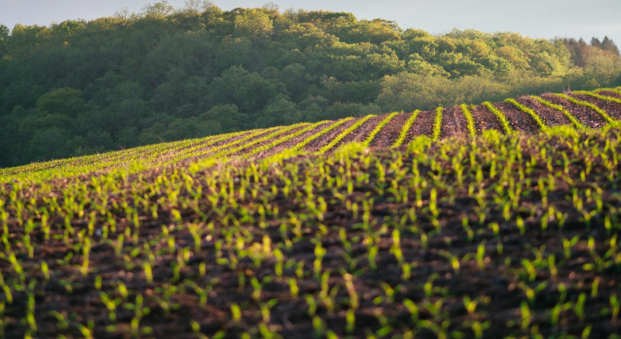 Midwest field